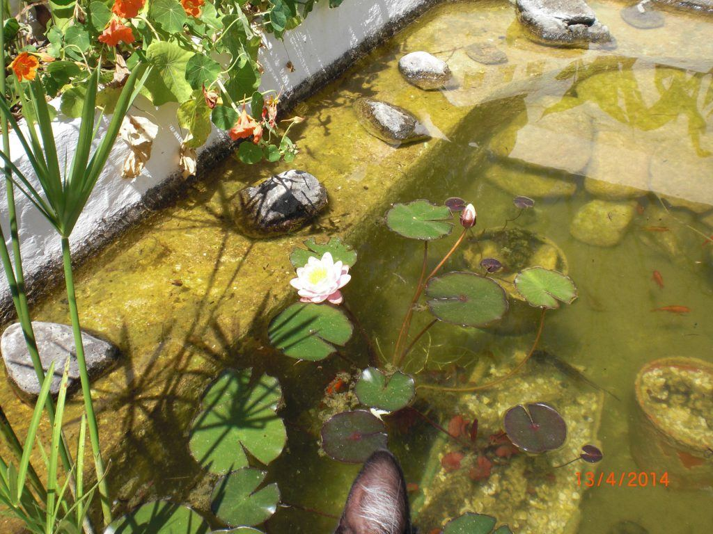 the little fishpond on the patio