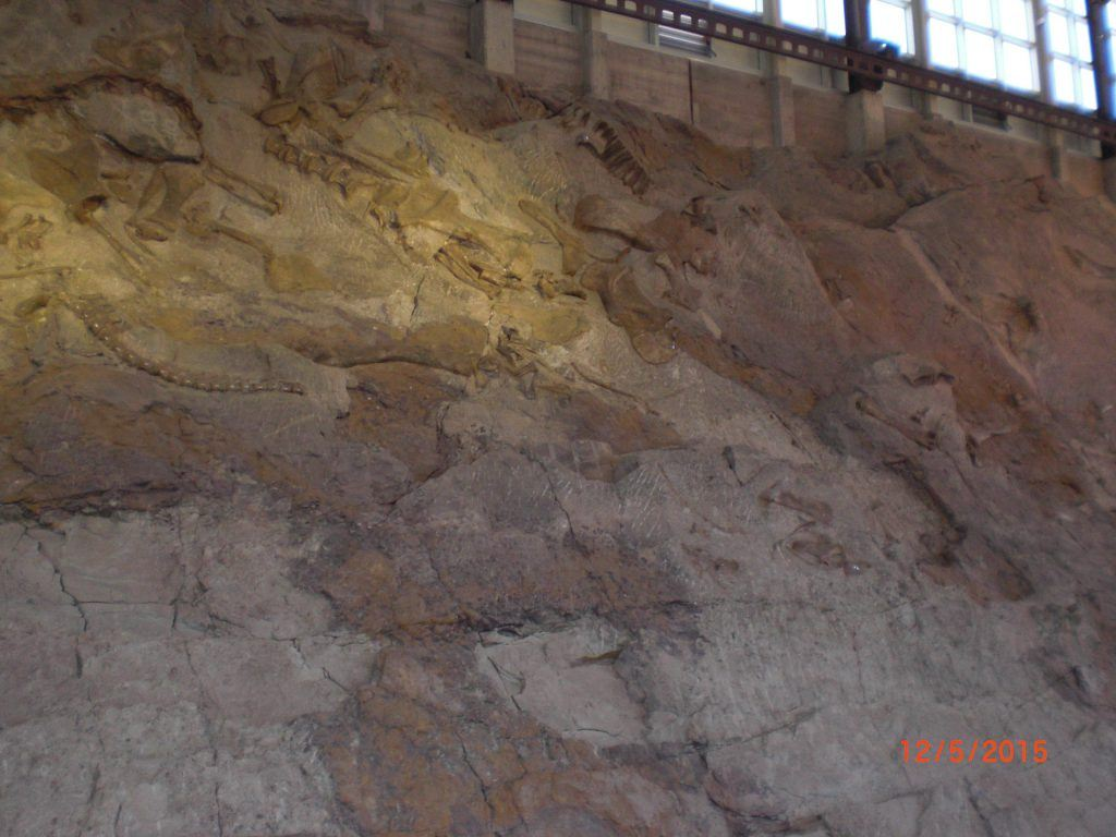 30 meter high wall with fossils