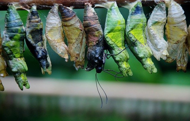 Cocoons