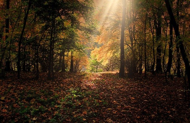 Sun ray in the forest