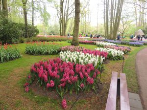 a beautiful park