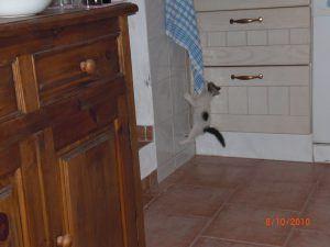 Sasha hanging on the kitchen towel