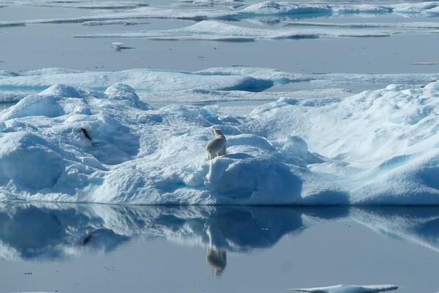 Polar-Bear on iceberg