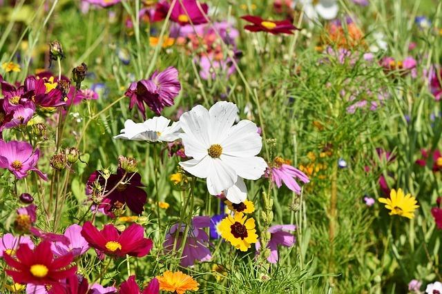 Wild Flowers growing in the meadow
