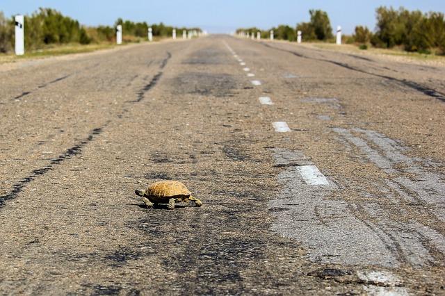 Tortoise crossing the road