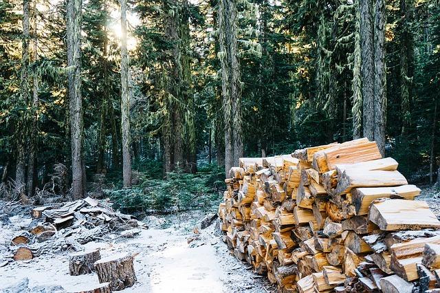 Wood Logging